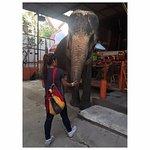 Hello big elephant