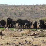 Foto de Rhulani Safari Lodge