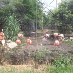 Flamingos at Manhattan zoo