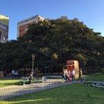 Gomero - the huge rubber tree in Plaza Francia