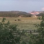 Photo of Zion Mountain Ranch