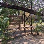 Pezulu Tree House Game Lodge Foto