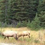 Photo de Discover Banff Tours