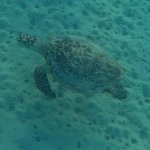 tartaruga vista nella barriera corallina davanti al resort