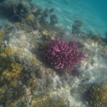 barriera corallina davanti al resort