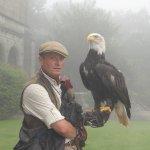 Falcony display - the bald eagle.
