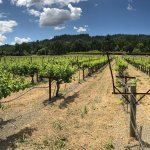 Foto de Duckhorn Vineyards