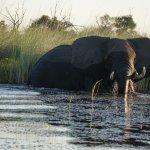 close encounters on the boat safari