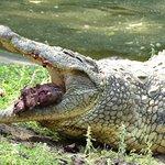 Photo of Crocodile Centre St Lucia