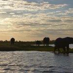 Crucero por el Rio Chobe al atardecer