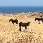 Donkeys, Santorini Greece