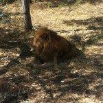 Photo of Ukutula Lion Park