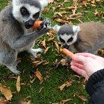 Yummy yummy carrot yummy yum...