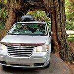 Drive through tree - Ta Da!