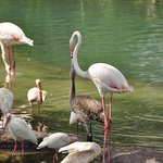 """The island these flamingos are on is a """"hidden Mickey"""""""