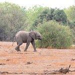 Baby elephant !