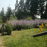 Photo of Catbird Ridge Summerland Bed and Breakfast