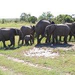 Elephant herd in Mara