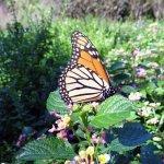 Photo de Fort Worth Botanic Garden
