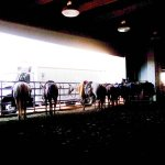 صورة فوتوغرافية لـ Livestock Exchange Building