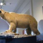 Foto de Museo Nacional Smithsonian de Historia Natural