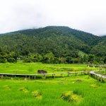 ฺ800 meters bamboo bride