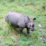 We saw rinos on our elephant safari