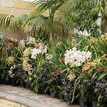 Orchids paradise