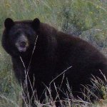 Photo de Aspenglen Campground, Rocky Mountain National Park