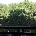 Photo of Club Family Hotel Costa dei Pini