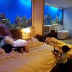 the premium aqua room experience