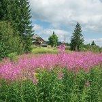 Nature lors d'une balade autour du sommet du Kandel, Forêt Noire
