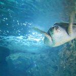 Photo of Aquarium de Biarritz