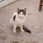 Photo of Provlita