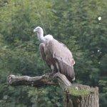 Photo of Tierpark Nordhorn