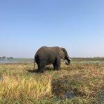 Ngoma Safari Lodge Foto