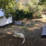 Uncle Rico (The Boss) and the Orange Grove Yurt, September 2017