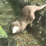 Photo of Loch Lomond Sea Life Aquarium