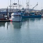 Fishing boats in the harbor.