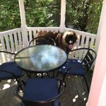 What dog wouldn't want a spot in the gazebo?