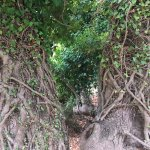 dettaglio di uno dei bellissimi alberi sul percorso per arrivare ad Aselinos