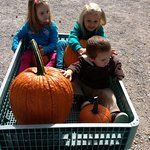 Wagons are available for pumpkins
