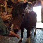 Feeding the horses treats