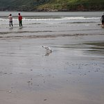 Finding food on Inch beach