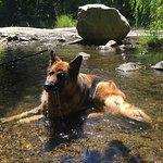 Tabu enjoying one of the many local falls and streams