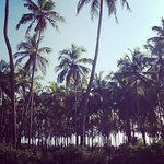 Photo of Vila Goesa Beach Resort