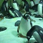 Penguins nesting on their eggs.