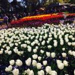 Foto Floriade
