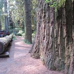 Foto de Redwood National Park