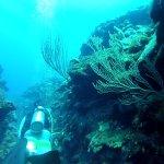 Diving between the barrier reefs